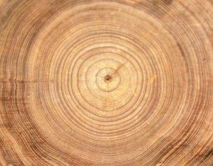 Gli alberi fanno storia