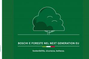 Piantare alberi per far ripartire il Paese