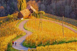 Su e giù per le strade del Vino