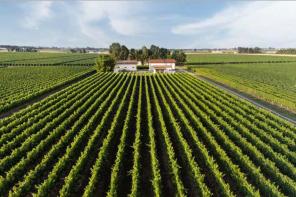 Il Lambrusco è il vino rosso italiano più diffuso in Italia e tra i primi nel mondo